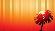 Sunset coconut vector video material