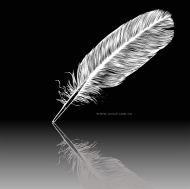 White feather vector material