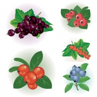 Berries vector material