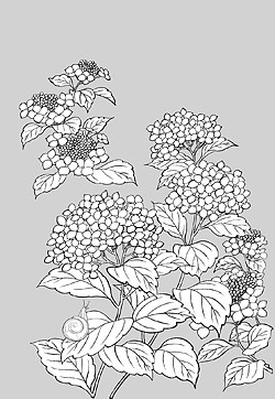 Japanese line drawing of plant material -1 Vector flowers (h
