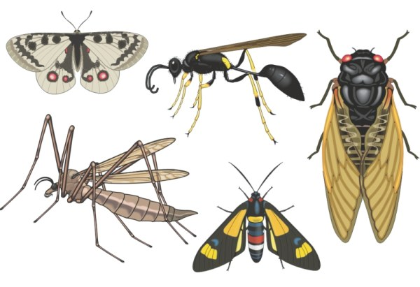 Realistic insect vector material
