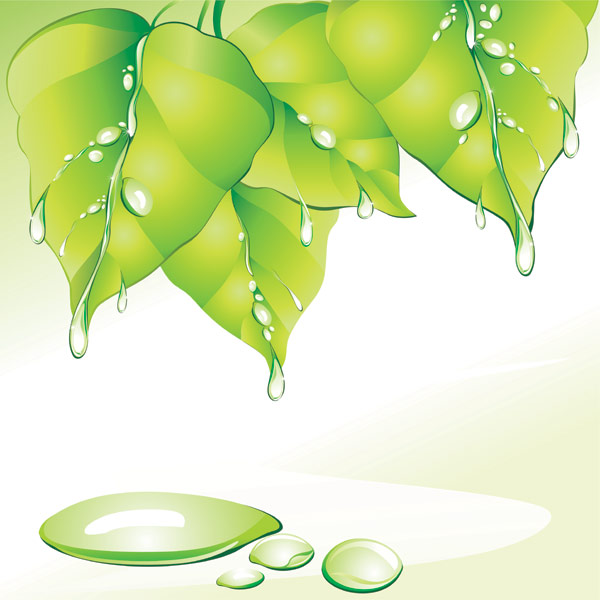 Green Leaf water drops vector material
